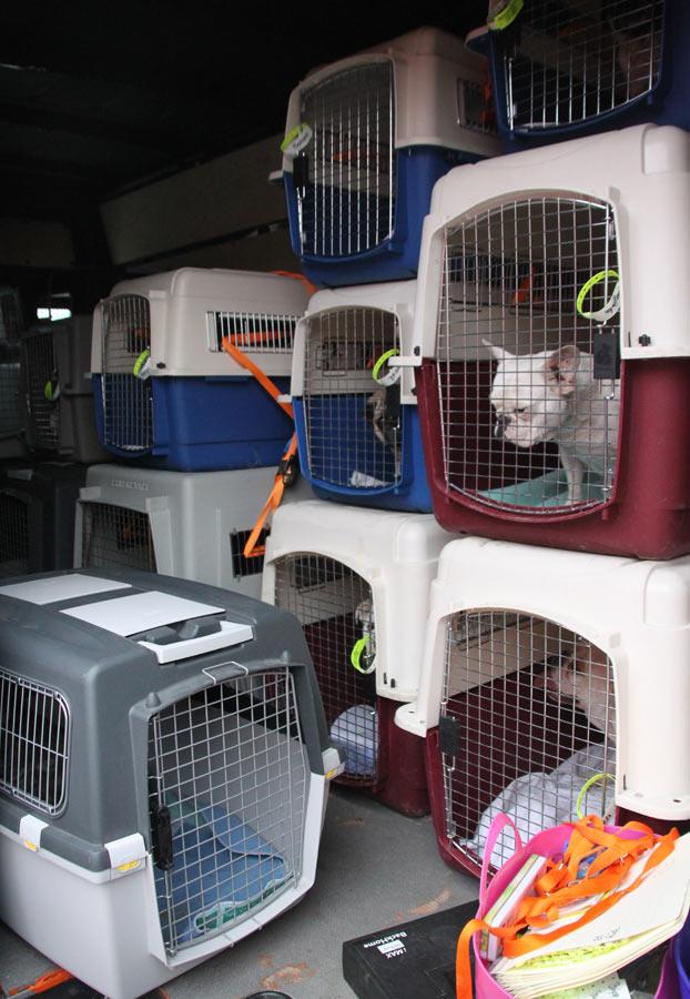 und leider schon wieder liberty for dogs retriever in not seite 14. Black Bedroom Furniture Sets. Home Design Ideas